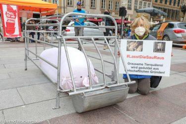 """""""Demonstration gegen Kastenstände in der Schweinehaltung""""am 17.10.2020auf dem Marienplatzin München© Bernd Wackerbauer"""